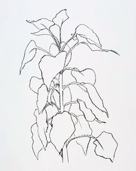 Drawing of a sunflower stalk in black pen